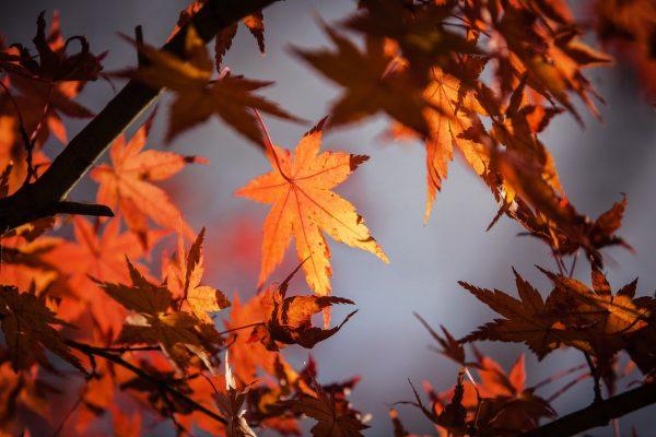 autumn building maintenance